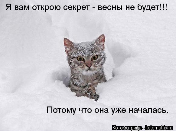 Котоматрица: Я вам открою секрет - весны не будет!!! Потому что она уже началась.