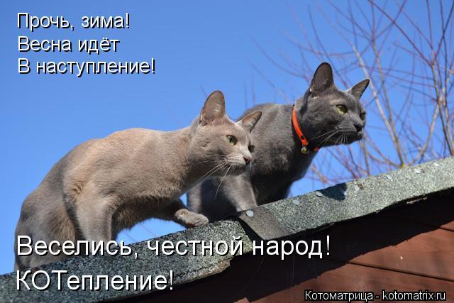 Котоматрица: Прочь, зима! Весна идёт В наступление! Веселись, честной народ! КОТепление!