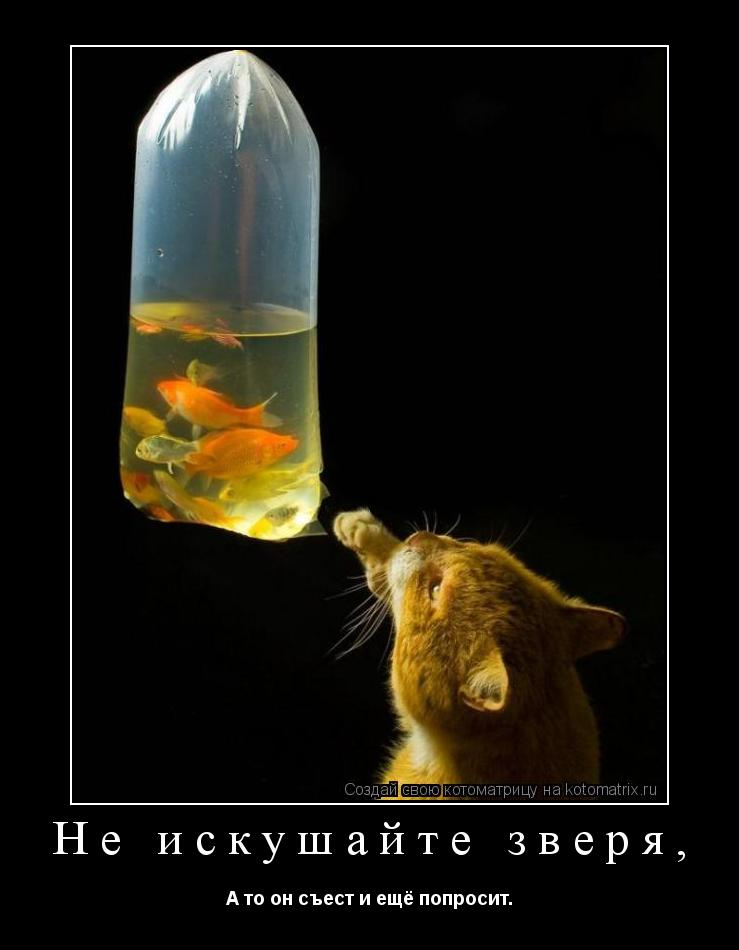 Котоматрица: Не искушайте зверя, А то он съест и ещё попросит.