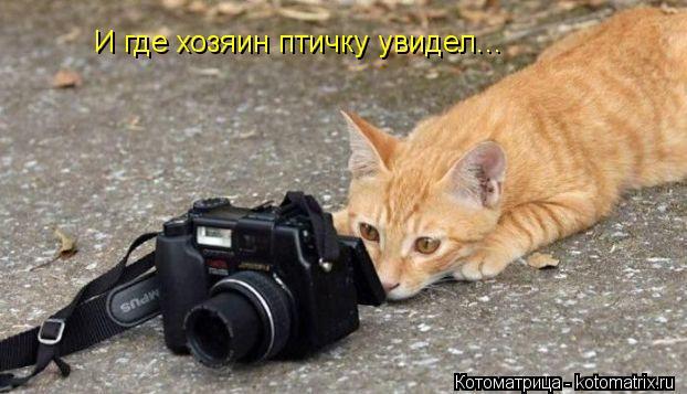 Котоматрица: И где хозяин птичку увидел...