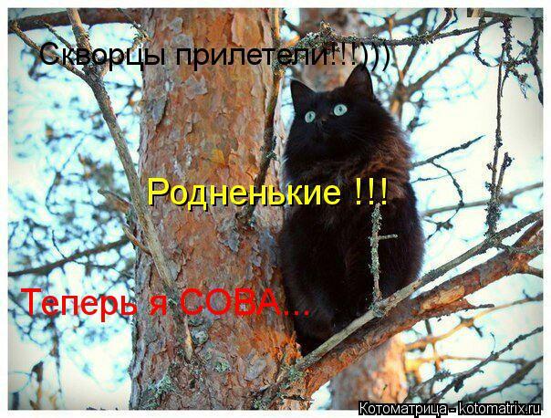 Котоматрица: Скворцы прилетели!!!))) Родненькие !!! Теперь я СОВА...