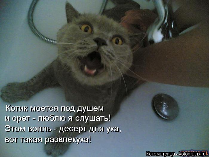 Котоматрица: Котик моется под душем и орет - люблю я слушать! Этом вопль - десерт для уха, вот такая развлекуха!