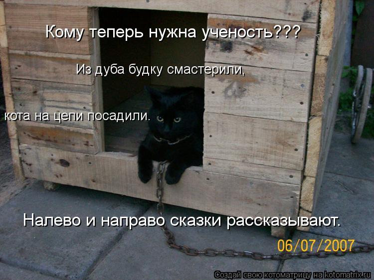 Котоматрица: Кому теперь нужна ученость??? Из дуба будку смастерили, кота на цепи посадили. Налево и направо сказки рассказывают.