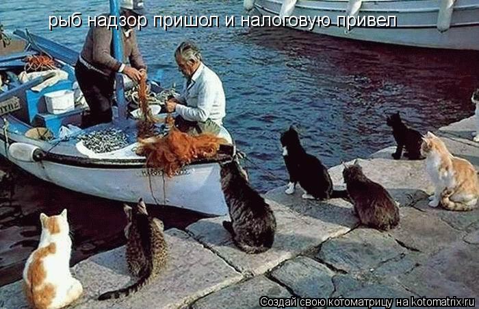 Котоматрица: рыб надзор пришол и налоговую привел