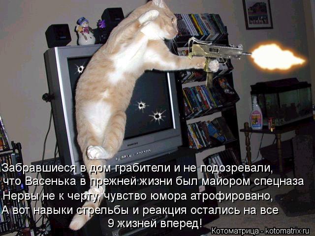 Котоматрица: Забравшиеся в дом грабители и не подозревали, что Васенька в прежней жизни был майором спецназа Нервы не к черту, чувство юмора атрофирован