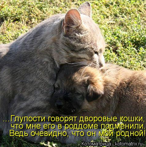 Котоматрица: ...Глупости говорят дворовые кошки, что мне его в роддоме подменили. Ведь очевидно, что он мой родной!