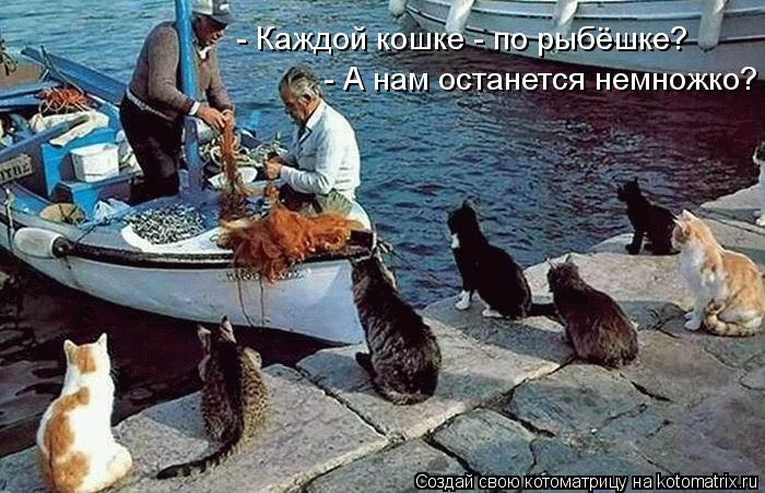 Котоматрица: - А нам останется немножко? - Каждой кошке - по рыбёшке?