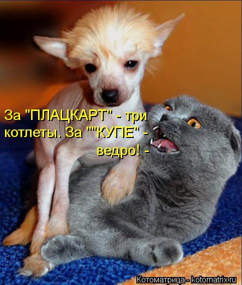 "Котоматрица: За ""ПЛАЦКАРТ"" - три котлеты. За """"КУПЕ"" - ведро! -"