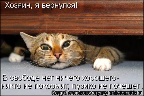 Котоматрица: Хозяин, я вернулся! В свободе нет ничего хорошего- никто не покормит, пузико не почешет..