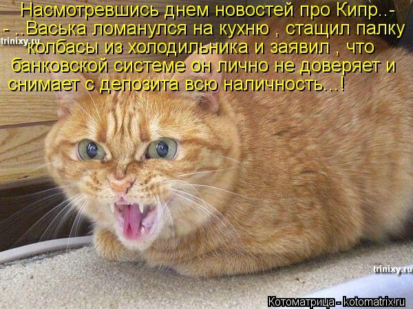 Котоматрица: Насмотревшись днем новостей про Кипр..- - ..Васька ломанулся на кухню , стащил палку  колбасы из холодильника и заявил , что  банковской систем
