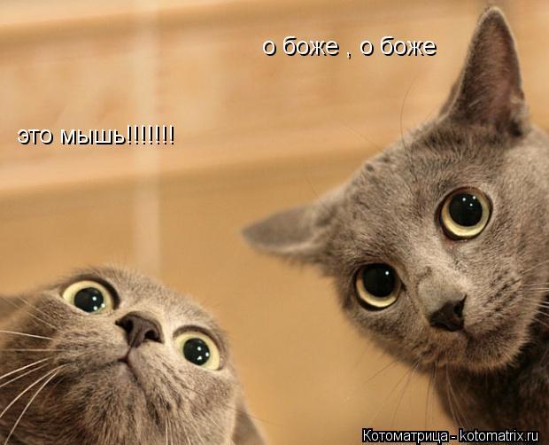 Котоматрица: это мышь!!!!!!! о боже , о боже