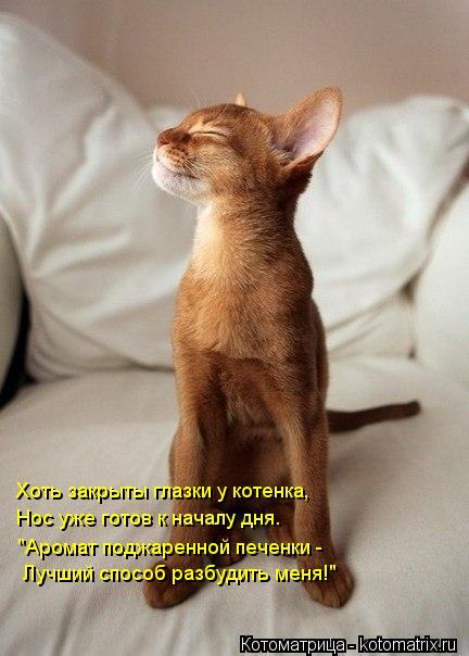"""Котоматрица: Хоть закрыты глазки у котенка, Нос уже готов к началу дня. """"Аромат поджаренной печенки - Лучший способ разбудить меня!"""""""