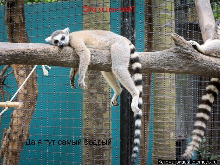 Котоматрица: Это я лентяй?  Да я тут самый бодрый!