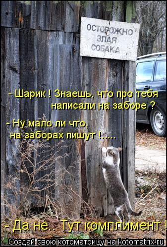Котоматрица: - Шарик ! Знаешь, что про тебя  написали на заборе ? - Ну мало ли что, на заборах пишут !..... - Да не.. Тут комплимент !