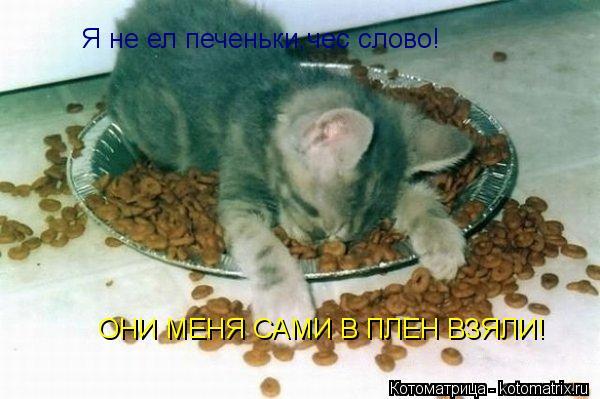 Котоматрица: Я не ел печеньки,чес слово! Они сами меня в плен зяли! Я не ел печеньки,чес слово! Я не ел печеньки,чес слово! ОНИ МЕНЯ САМИ В ПЛЕН ВЗЯЛИ!