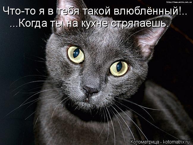 Котоматрица: Что-то я в тебя такой влюблённый!.. ...Когда ты на кухне стряпаешь.