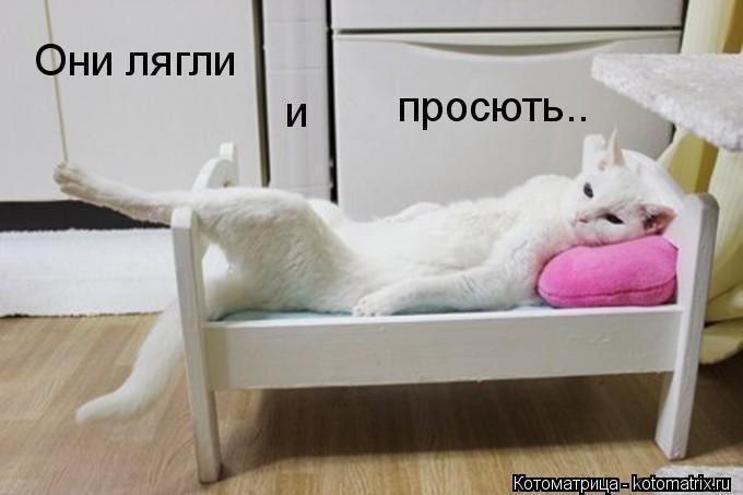 Котоматрица: Они лягли и просють..