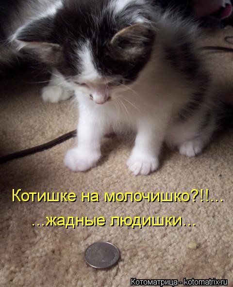 Котоматрица: Котишке на молочишко?!!... ...жадные людишки...