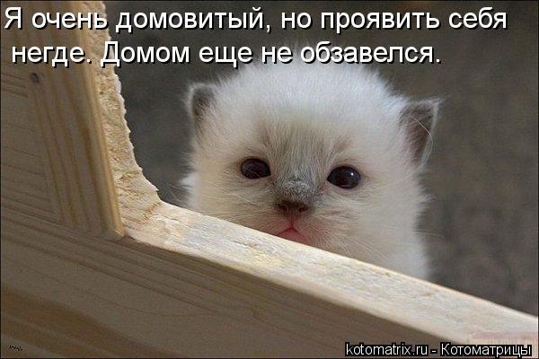 Котоматрица: Я очень домовитый, но проявить себя  негде. Домом еще не обзавелся.