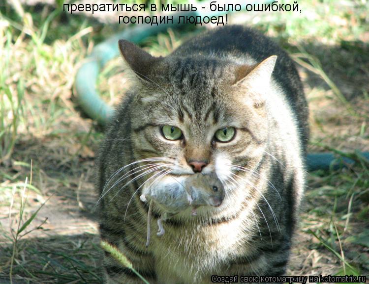 Котоматрица: превратиться в мышь - было ошибкой, превратиться в мышь - было ошибкой, господин людоед!
