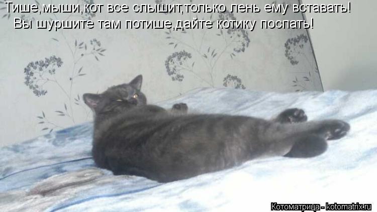 Котоматрица: Тише,мыши,кот все слышит,только лень ему вставать! Вы шуршите там потише,дайте котику поспать!
