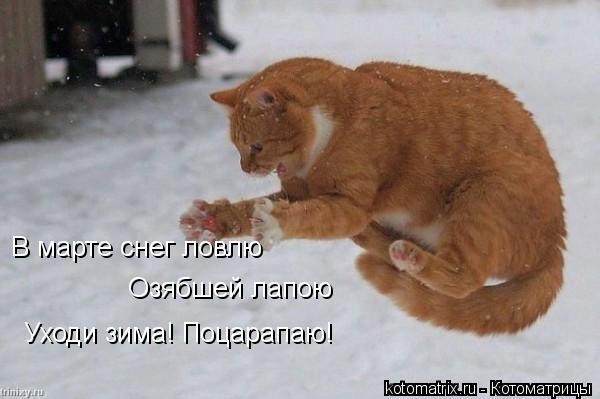 Котоматрица: Уходи зима! Поцарапаю! В марте снег ловлю Озябшей лапою