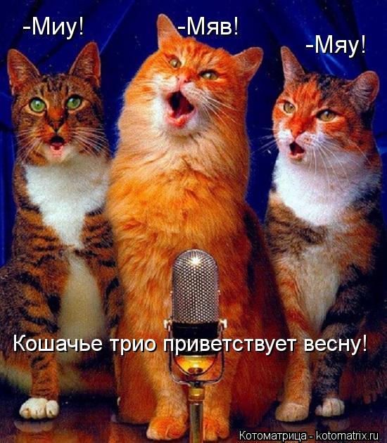 Котоматрица: -Миу! -Мяв! -Мяу! Кошачье трио приветствует весну!