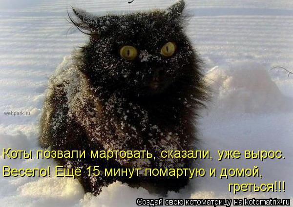 Котоматрица: Весело! Ещё 15 минут помартую и домой, греться!!! Коты позвали мартовать, сказали, уже вырос.