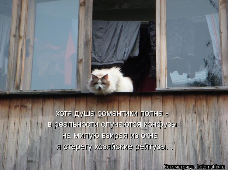 Котоматрица: хотя душа романтики полна - в реальности случаются конфузы: на милую взирая из окна я стерегу хозяйские рейтузы...