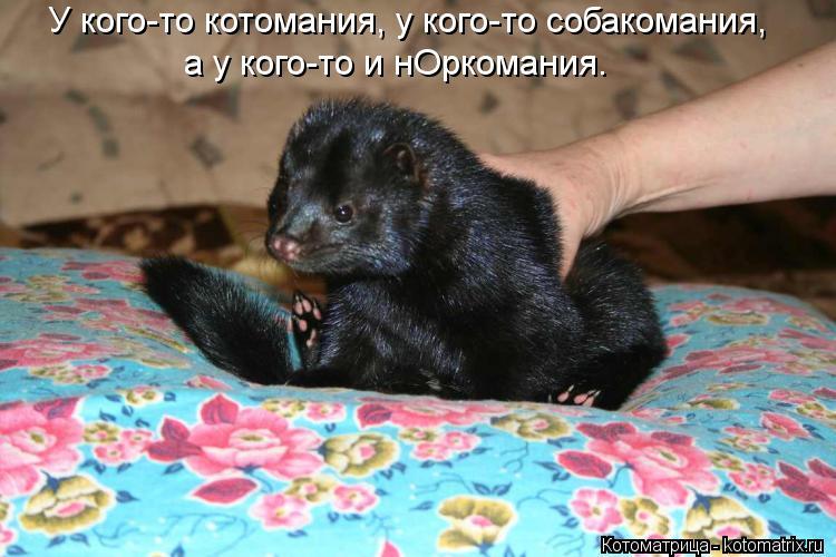 Котоматрица: У кого-то котомания, у кого-то собакомания, а у кого-то и нОркомания.