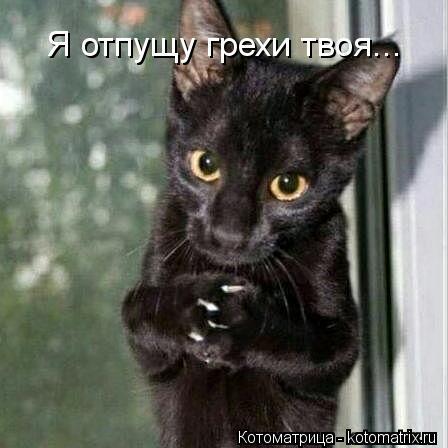 kotomatritsa_jQ.jpg