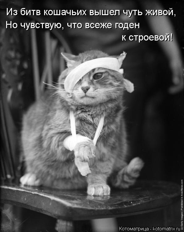 Котоматрица: Из битв кошачьих вышел чуть живой, Но чувствую, что всеже годен  к строевой!