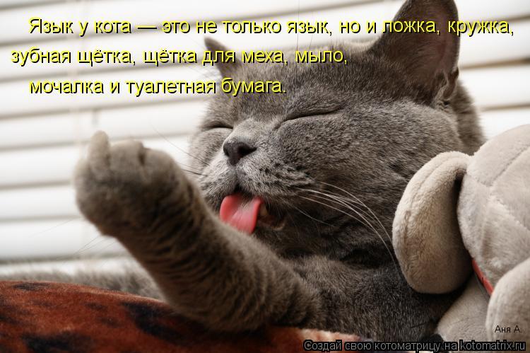 Котоматрица: Язык у кота — это не только язык, но и ложка, кружка, зубная щётка, щётка для меха, мыло, мочалка и туалетная бумага. Аня А.