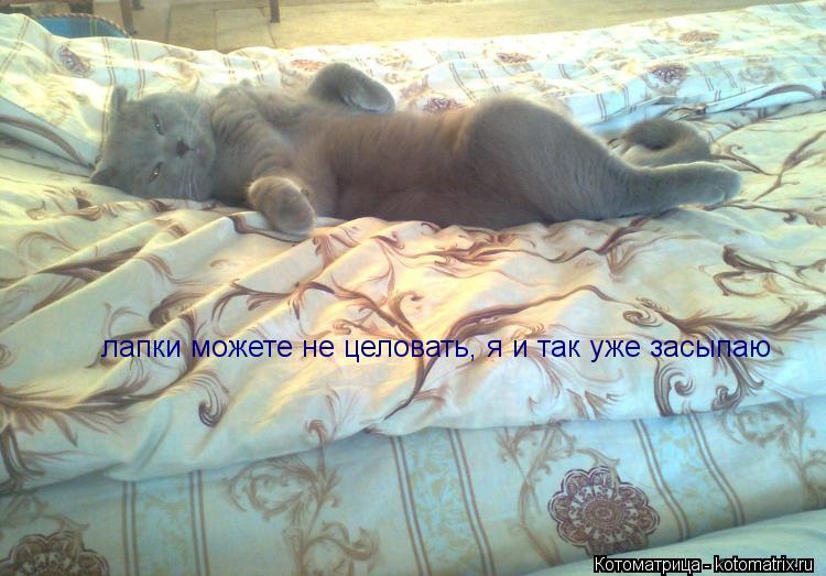 Котоматрица: лапки можете не целовать, я и так уже засыпаю