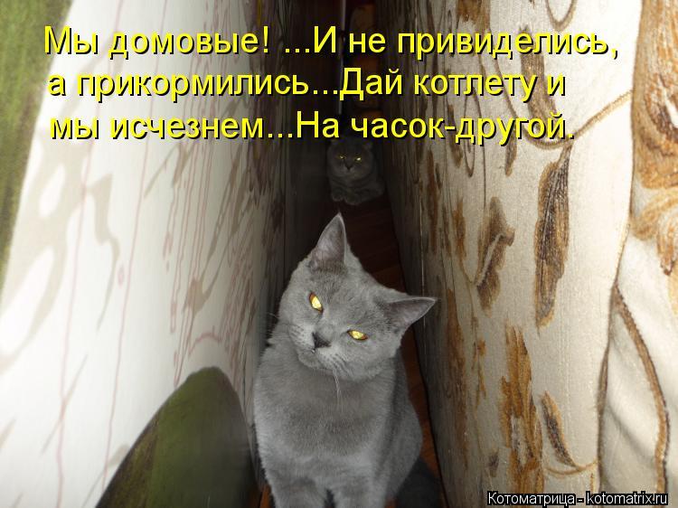 Котоматрица: Мы домовые! ...И не привиделись,  а прикормились...Дай котлету и мы исчезнем...На часок-другой.