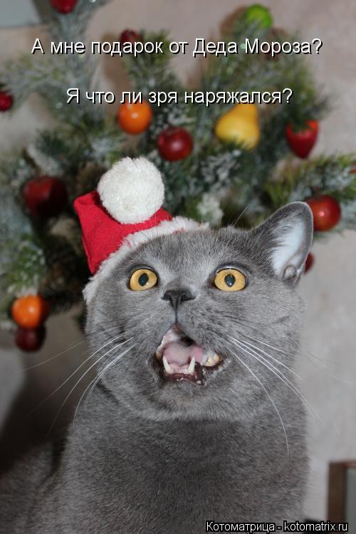 Котоматрица: А мне подарок от Деда Мороза? Я что ли зря наряжался?