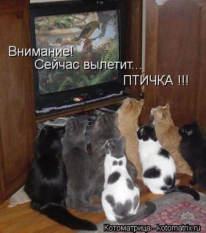 Котоматрица: Внимание! Сейчас вылетит... ПТИЧКА !!!