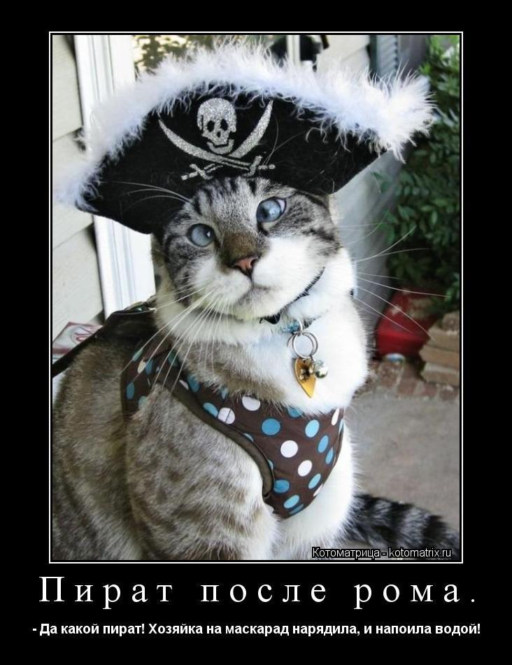 Котоматрица: Пират после рома. - Да какой пират! Хозяйка на маскарад нарядила, и напоила водой!