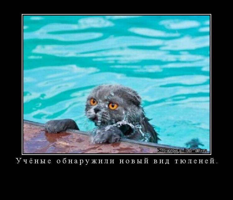 Котоматрица: Учёные обнаружили новый вид тюленей.