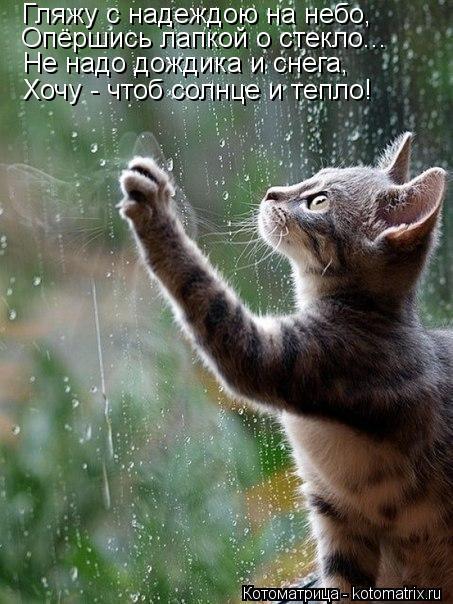 Котоматрица: Гляжу с надеждою на небо, Опёршись лапкой о стекло... Не надо дождика и снега, Хочу - чтоб солнце и тепло!