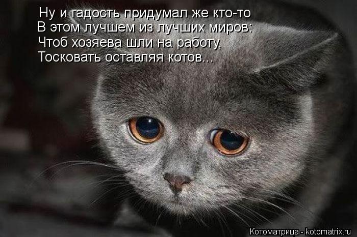 Котоматрица: Ну и гадость придумал же кто-то В этом лучшем из лучших миров: Чтоб хозяева шли на работу, Тосковать оставляя котов...