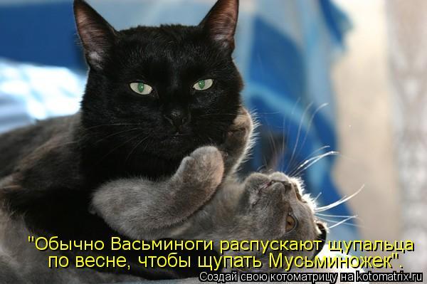 """Котоматрица: """"Обычно Васьминоги распускают щупальца по весне, чтобы щупать Мусьминожек""""."""