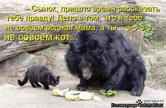 Котоматрица: - Сынок, пришло время рассказать  тебе правду! Дело в том, что я тебе  не совсем родная мама, а ты... э-э-э-э.. не совсем кот...