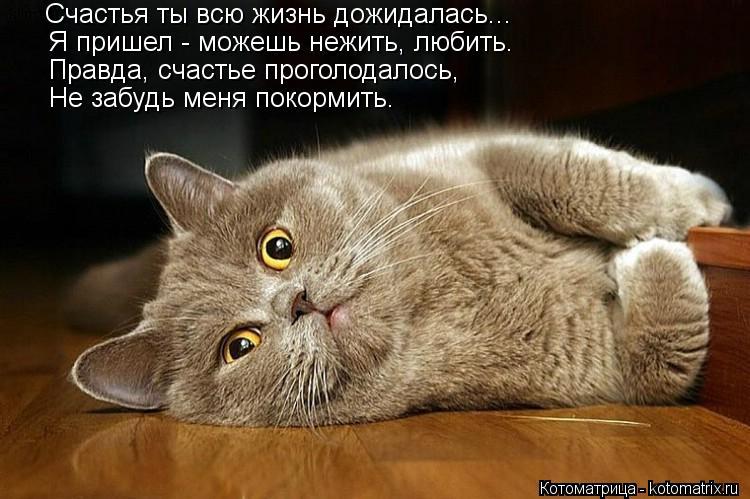 Котоматрица: Счастья ты всю жизнь дожидалась... Я пришел - можешь нежить, любить. Правда, счастье проголодалось, Не забудь меня покормить.