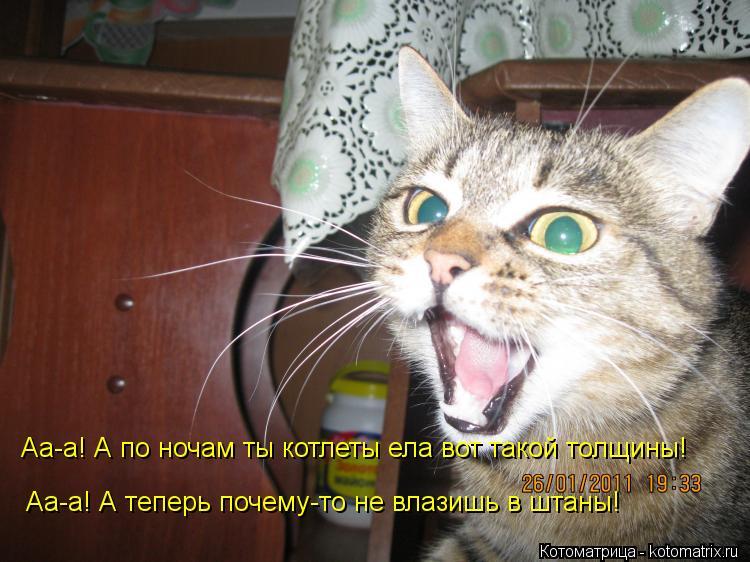 Котоматрица: Аа-а! А по ночам ты котлеты ела вот такой толщины! Аа-а! А теперь почему-то не влазишь в штаны!