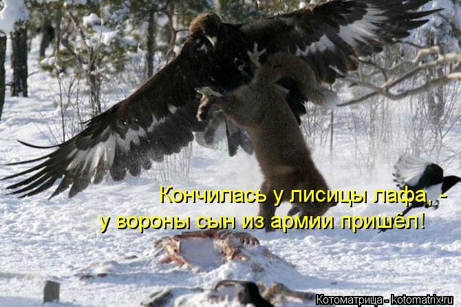 Кончилась у лисицы лафа, -  у вороны сын из армии пришёл!