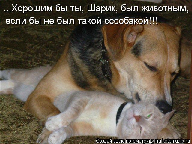 Котоматрица: ...Хорошим бы ты, Шарик, был животным,  если бы не был такой сссобакой!!!