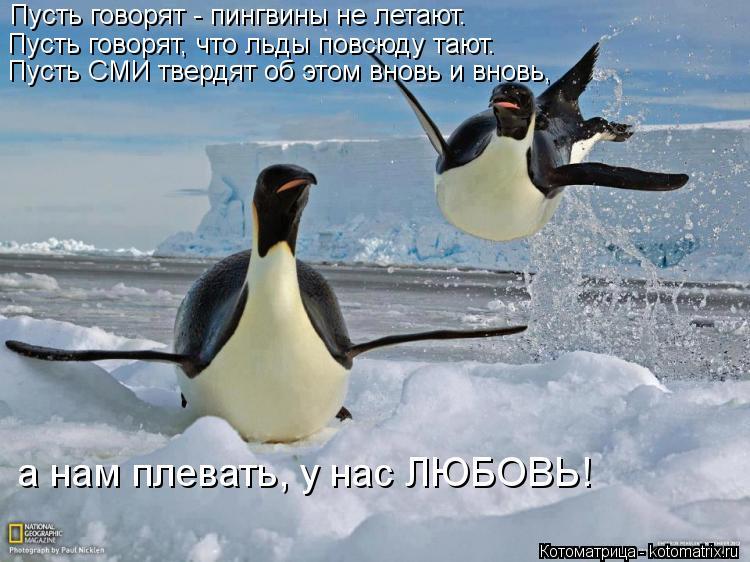 Котоматрица: Пусть говорят - пингвины не летают.  Пусть говорят, что льды повсюду тают.  Пусть СМИ твердят об этом вновь и вновь,  а нам плевать, у нас ЛЮБОВ