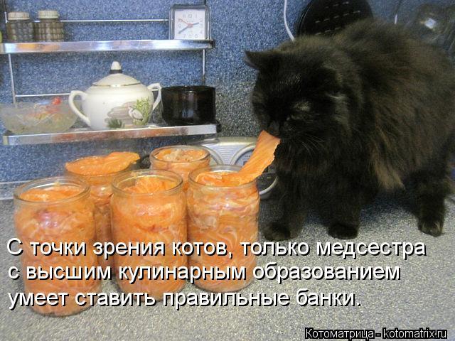 С точки зрения котов, только медсестра с высшим кулинарным образованием умеет ставить правильные банки.