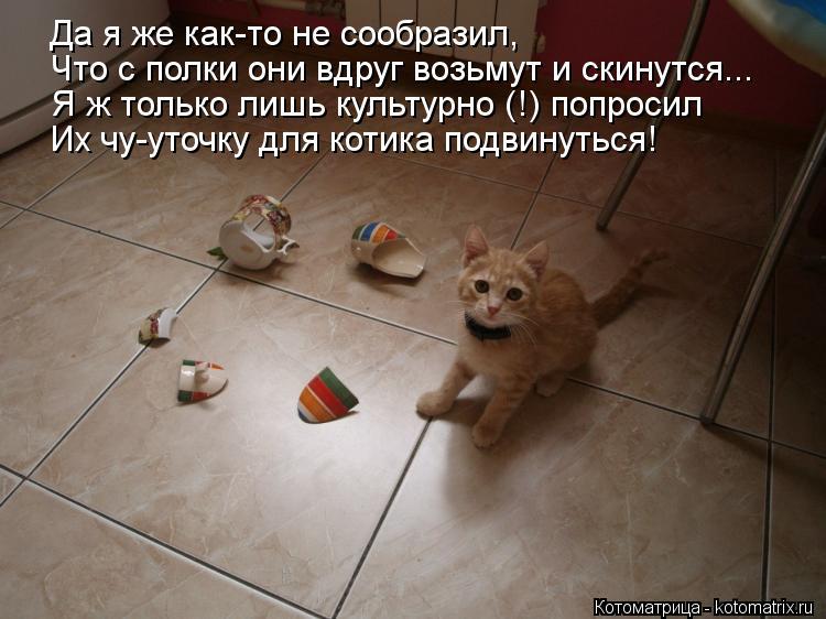 Котоматрица: Да я же как-то не сообразил, Что с полки они вдруг возьмут и скинутся... Я ж только лишь культурно (!) попросил Их чу-уточку для котика подвинут